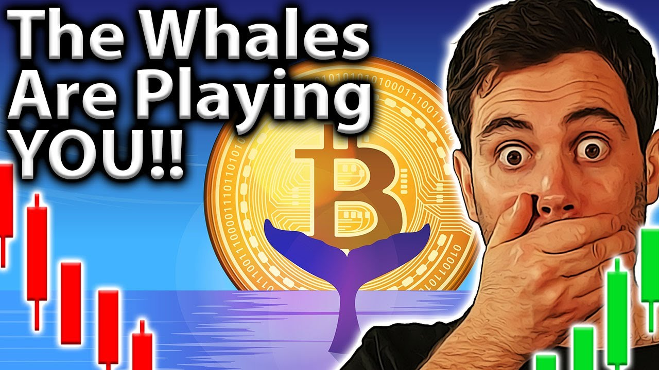 Whales Playing You